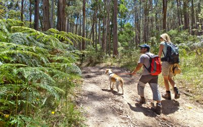 Get Outside And Get Your Dose of Nature Just 1 Hour Out Of Ballarat